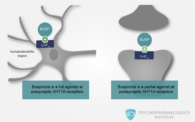 5-HT1A Receptors in Psychopharmacology - Psychopharmacology